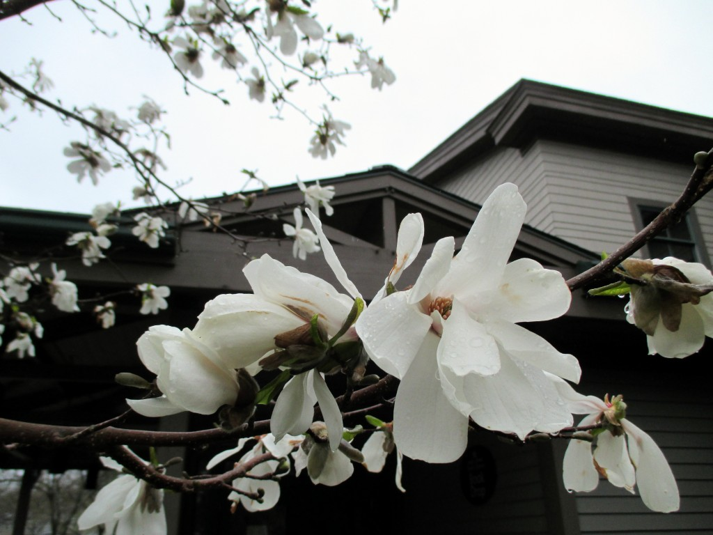 Spring at the Hamilton-Wenham Public Library